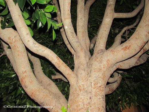 San Fran Tree